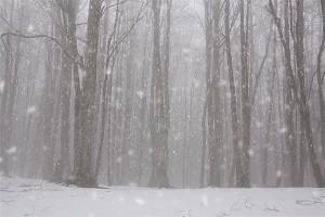 snowtut