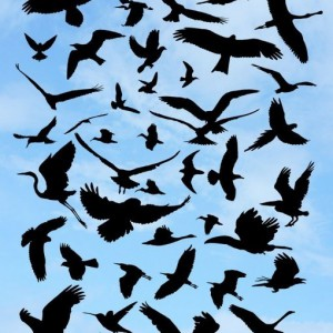 Download 40 Bird Silhouette Photoshop Brushes
