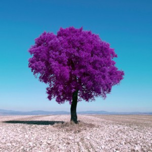 How to create surreal infrared images in Photoshop