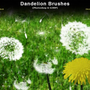 Dandelions and Seeds Photoshop Brushes