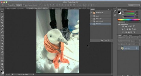 Quick and Easy Auto Color Correction in Photoshop